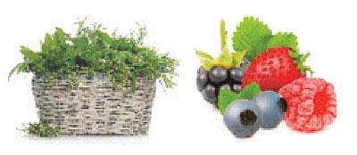 111-Kombinace-Alspke-byliny-Lesni-ovoce