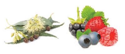 111-Kombinace-Eukalyptus-Lesni-ovoce