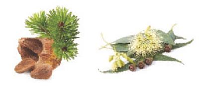 111-Kombinace-Kosodrevina-Eukalyptus