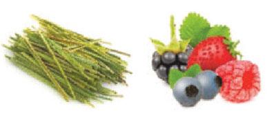 111-Kombinace-Lemongrass-Lesni-ovoce