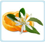 pomerancovy-kvet
