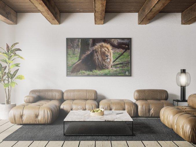 Fotoobraz Král zvířat