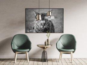 Fotoobraz Kočičí respekt