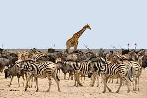 NAMÍBIA - víza vopred