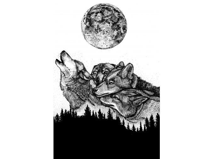 Vlci 1