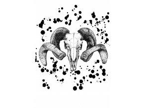 Skull Plakát
