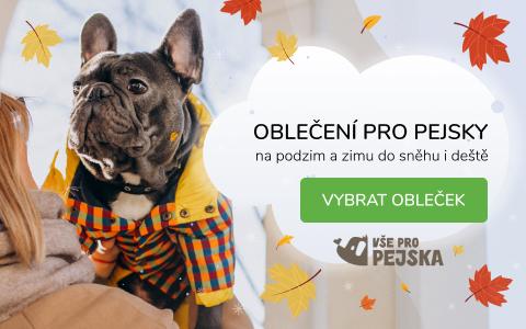 Proč oblékáme psy?