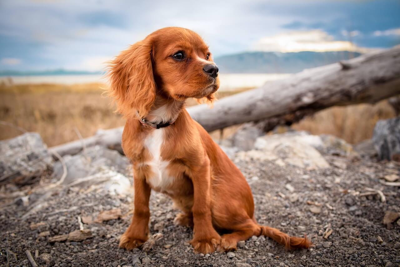 Kam na výlet se psem ve Zlínském kraji?