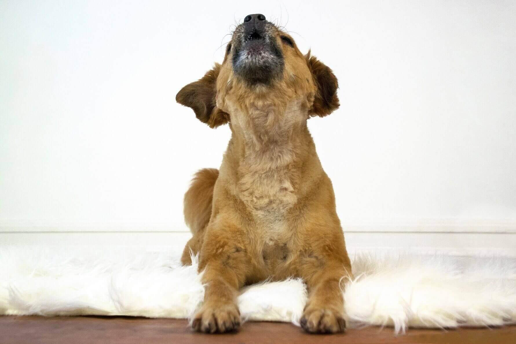 Jak uklidnit Vašeho psa nebo kočku pomocí přírodních produktů Beaphar?