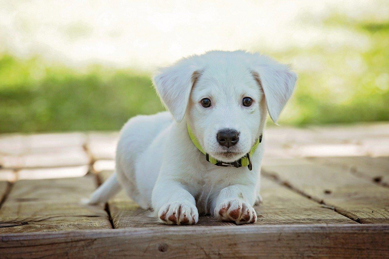 Základní výbava pro štěně