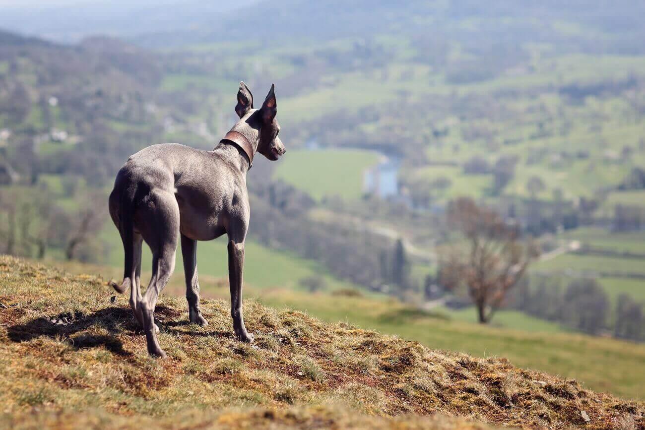 5 tipů na výlet se psem v Jihomoravském kraji