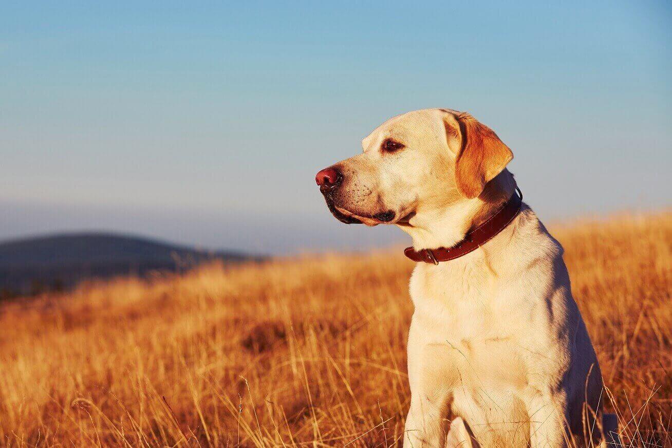 Inspirace na výlet se psem v Olomouckém kraji