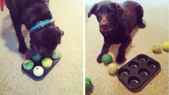 Vlastnorucne-vyrobena-hracka-pro-psa-3