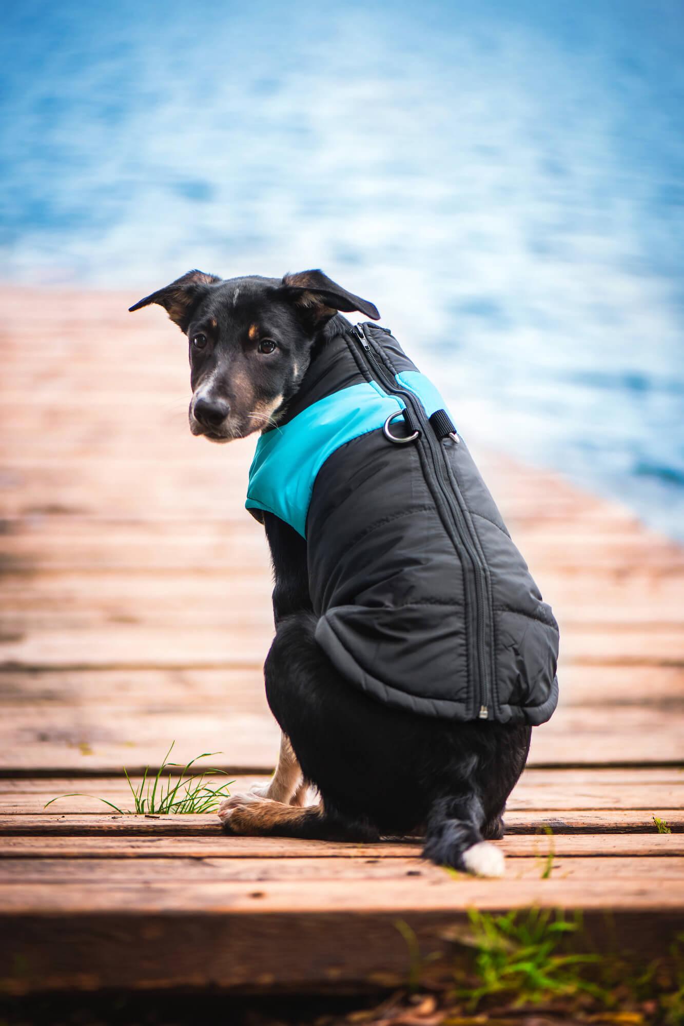 Slim-rainy obleček pro psa na zip - oblečky pro psy - vsepropejska.cz