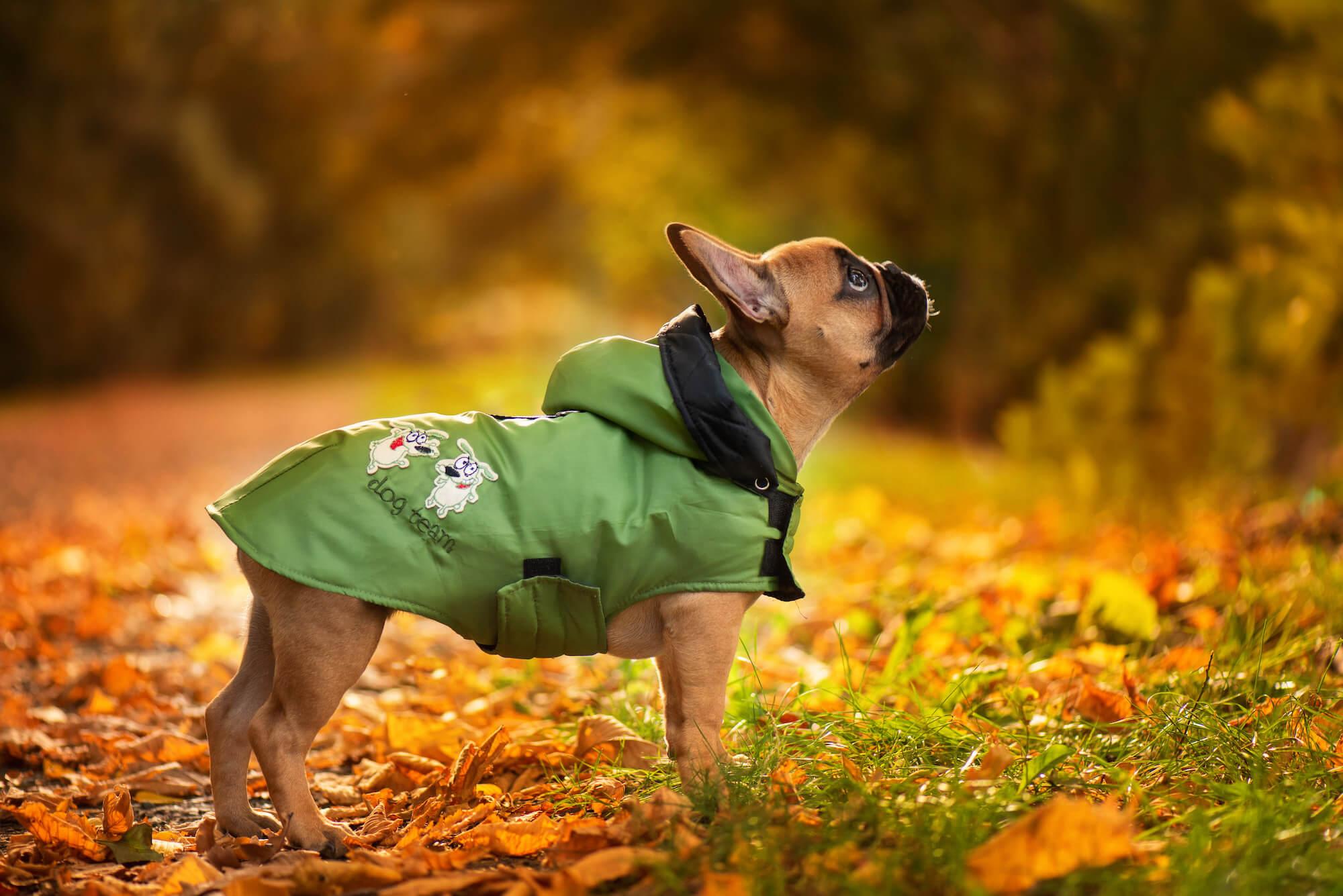 Autumn pláštěnka pro psa - pláštěnky pro psy - vsepropejska.cz