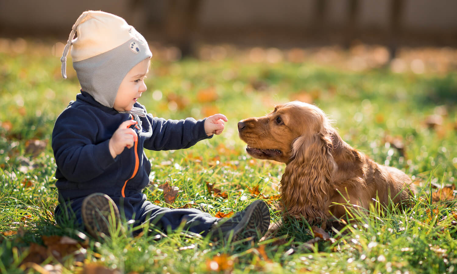 boy-sitting-on-the-grass-with-a-dog-PHGV25G