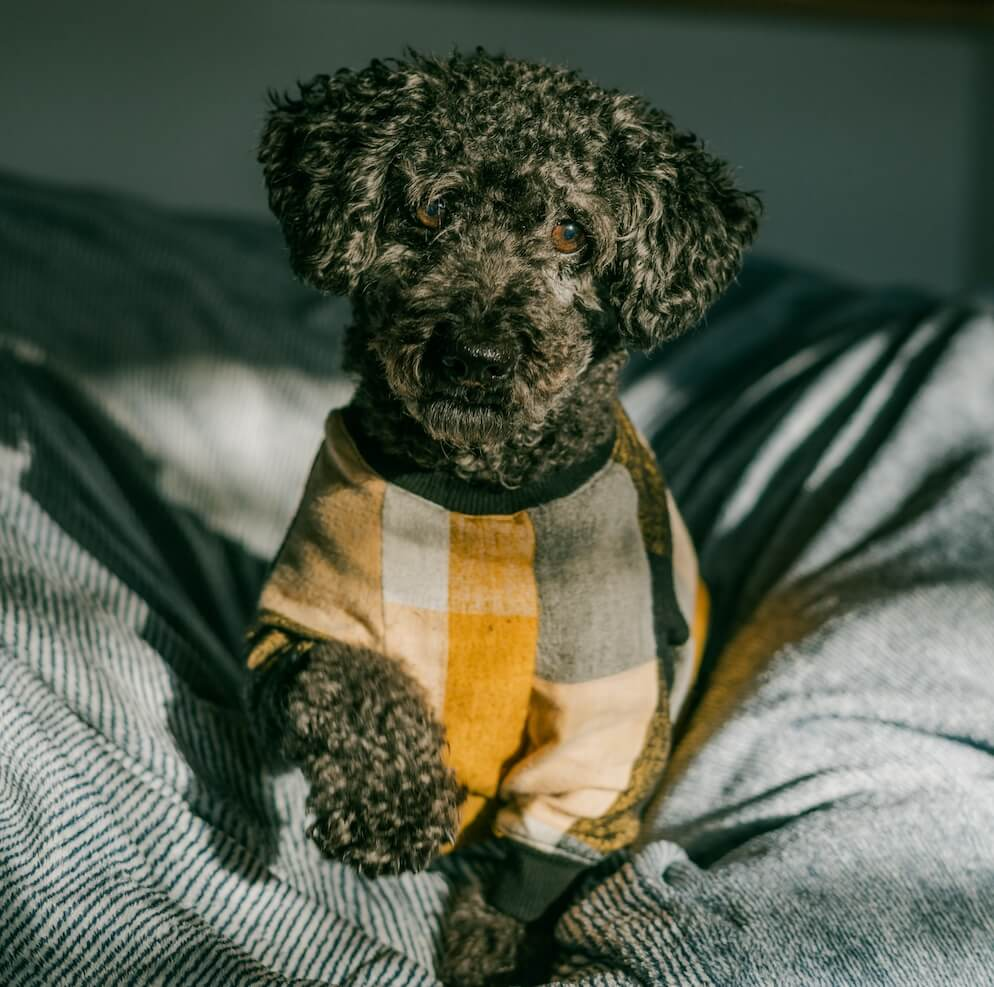 cute-dog-with-sweater-winter-LSZJQ3F