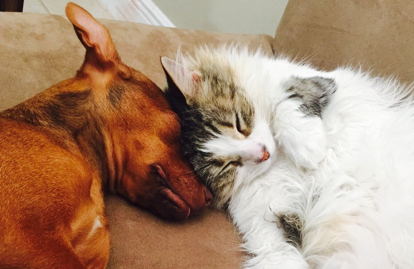 dog-and-cat-love-4SLHCXT