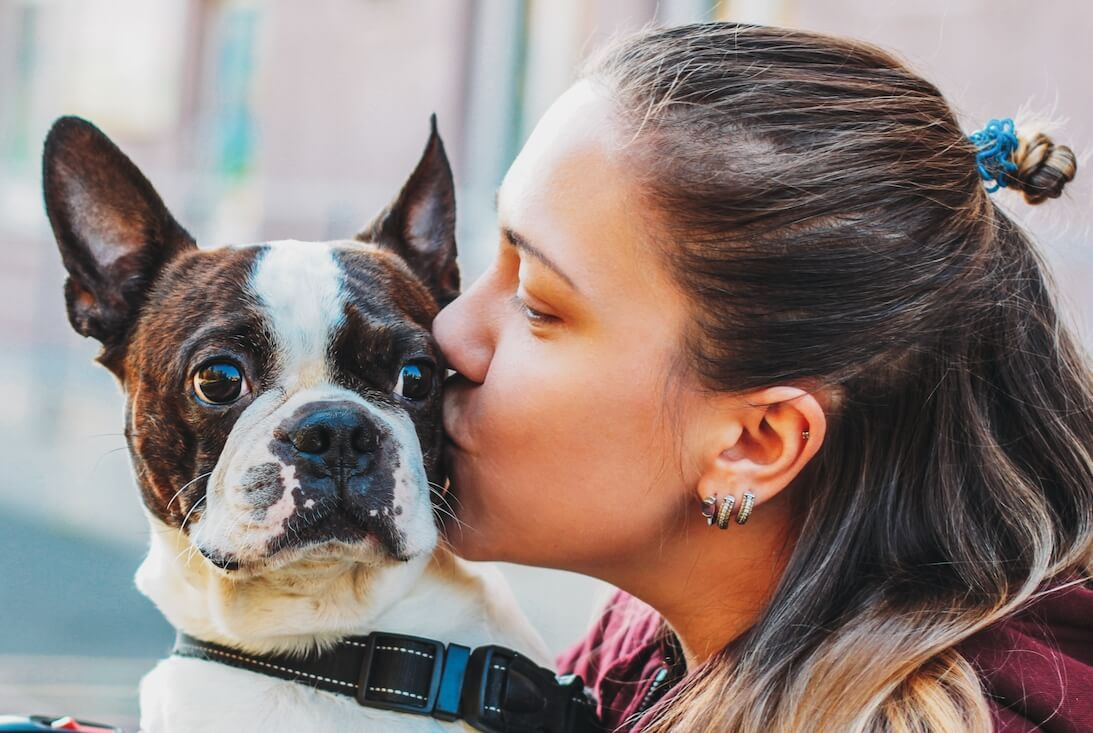 dog-boston-terrier-in-the-hands-of-woman-love-and--NTVJTFD