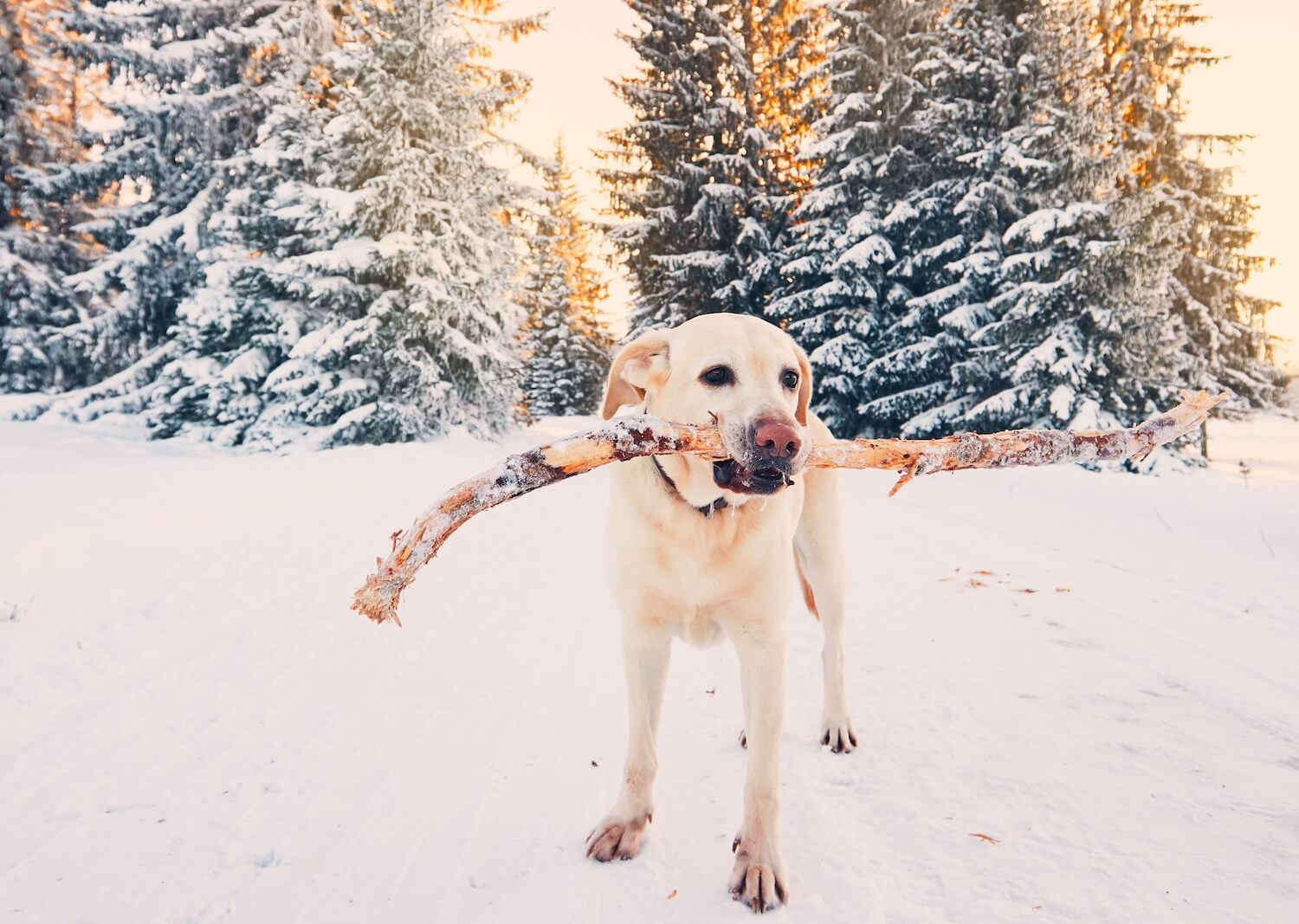 dog-in-winter-nature-PDCWAE3