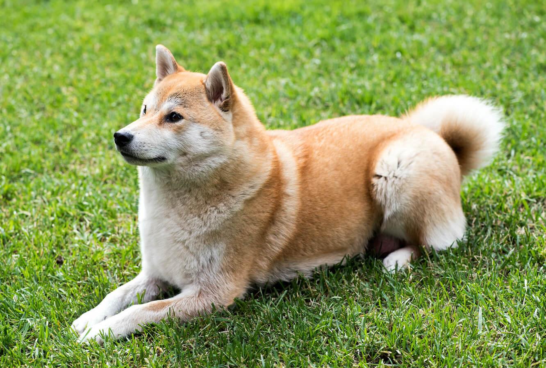 dog-laying-on-the-grass-P6ZPSDJ-2