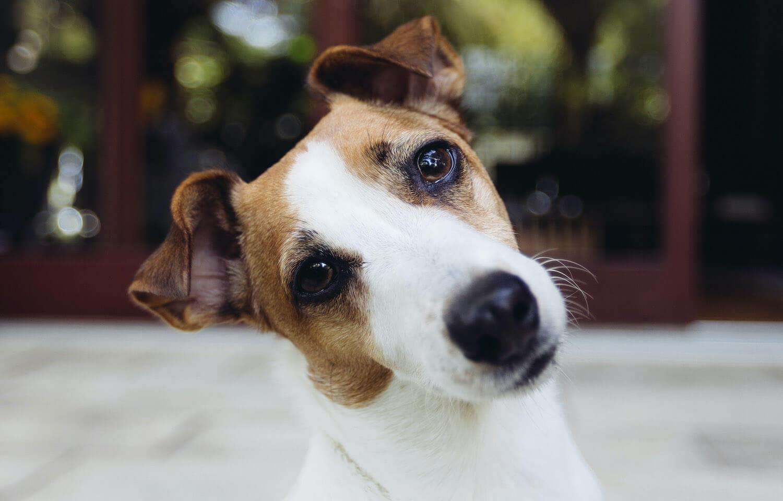 dog-looking-curious-PKQVBYP