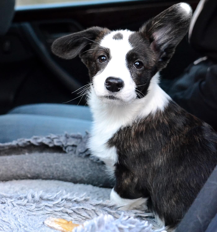dog-sitting-in-the-car-QMCMQPK