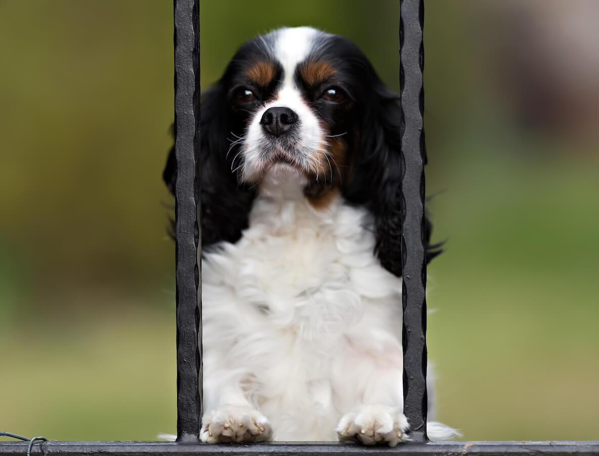 dog-waiting-PU2T8JG