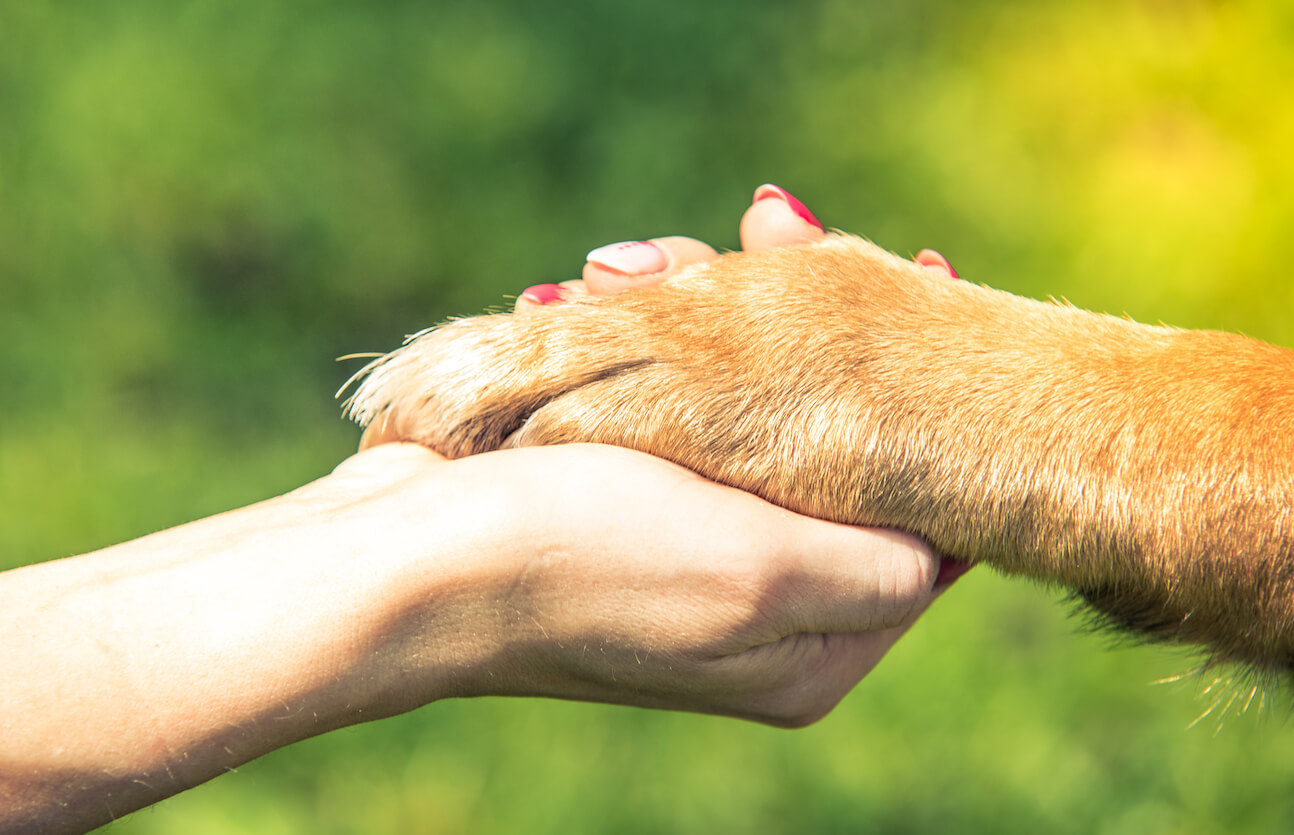 hand-holding-dog-paw-relationship-and-love-concept-P6QE9C8