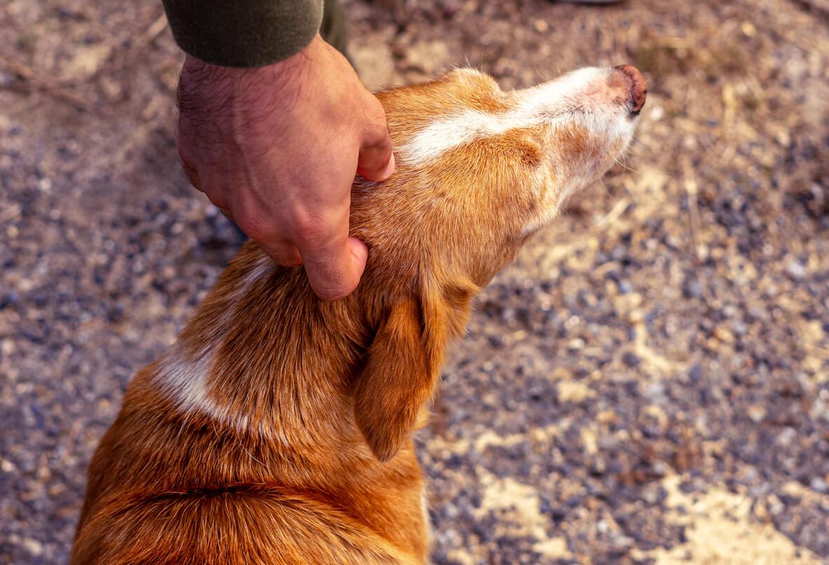 hand-petting-a-stray-dog-9D5GJQU