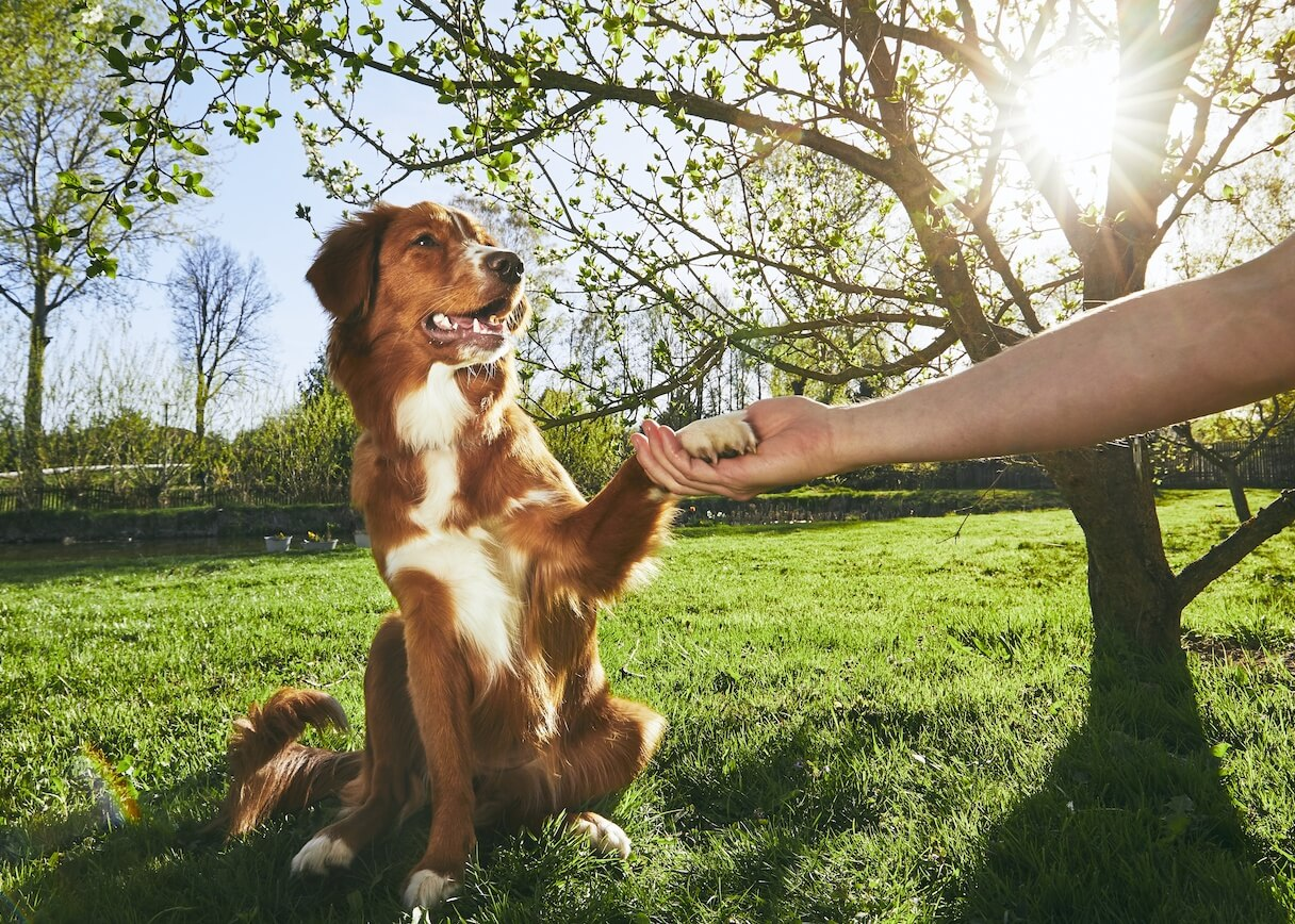 man-holding-paw-of-the-his-dog-PK9YMWV