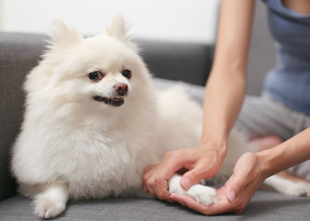 pet-owner-checking-the-hand-of-her-dog-NJALP2W-2