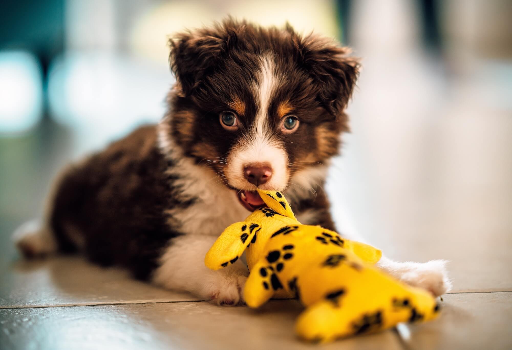 puppy-toy-5KYMK49