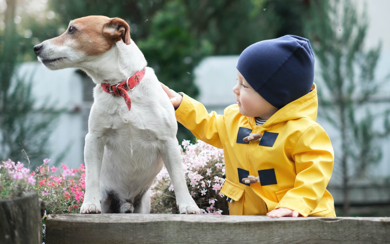 small-kid-with-dog-YC6WDXN