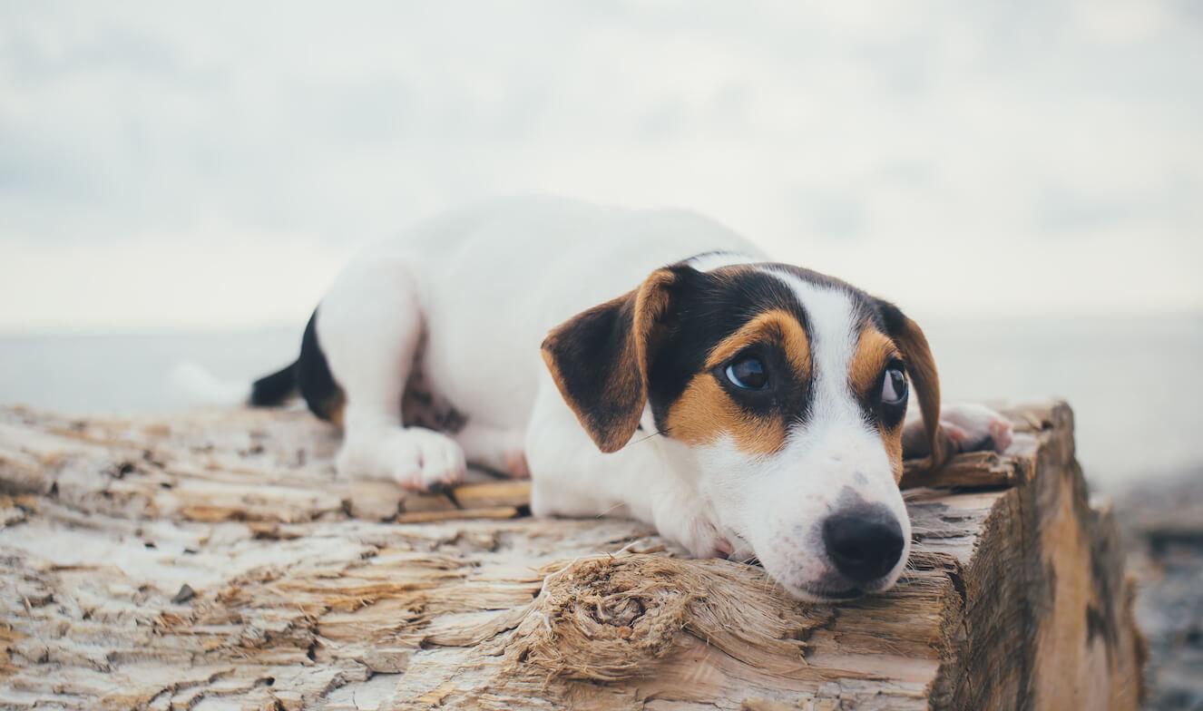 the-dog-is-lying-on-a-log-PWEELBR