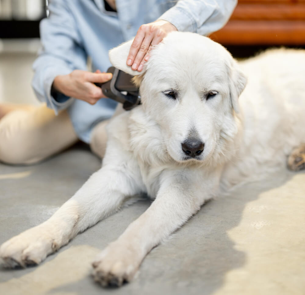 woman-combs-the-dogs-hair-with-a-brush-EGFM49V
