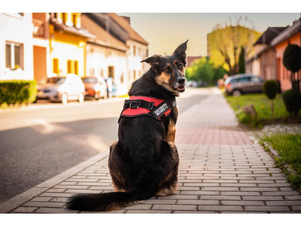 Security červený reflexní postroj pro psa - postroje pro psy - vseporpejska.cz