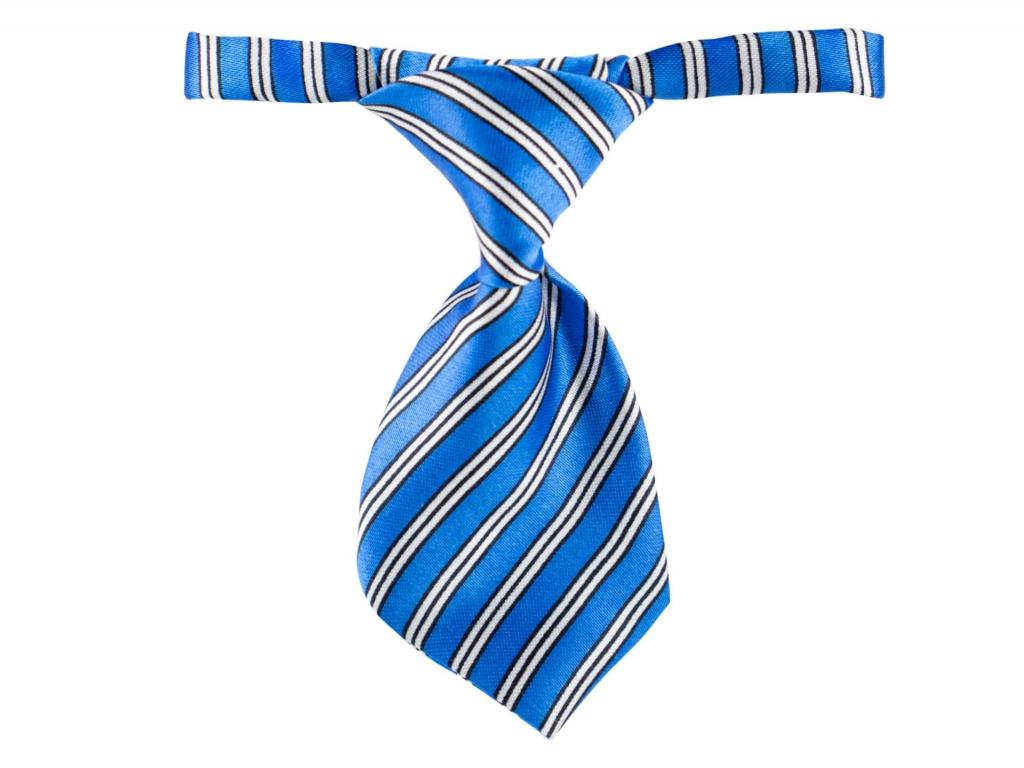 Rex modrá kravata pro psa - kravaty pro psy - vsepropejska.cz