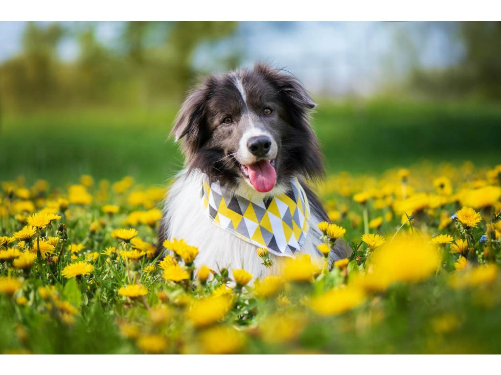Lina žluto-šedý šátek pro psa