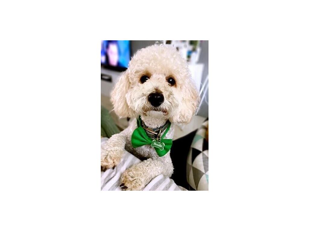 Zeleny motylek pro psa 4