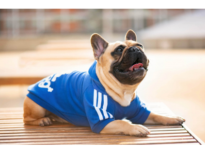 Adidog modrá mikina pro psa - oblečky pro psy - vsepropejska.cz