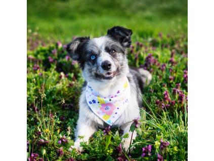 Mandy růžový šátek pro psa