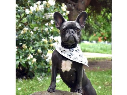 Luci bílý šátek pro psa