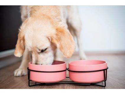 Doris dvojitá keramická miska pro psa či kočku