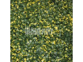 umely zivy plot zlute panasovany zimomraz buxus 50 50 cm