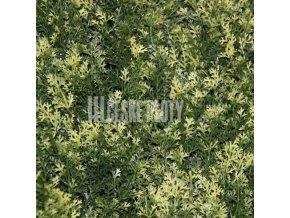 Umělý živý plot - jednostranný- bíle panašovaný jehličnan zerav 50x50 cm - 1 m2