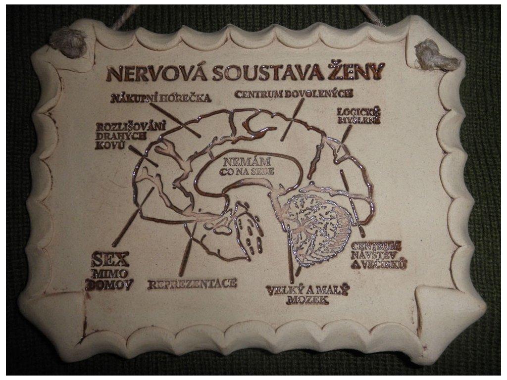 Nervová soustava ženy