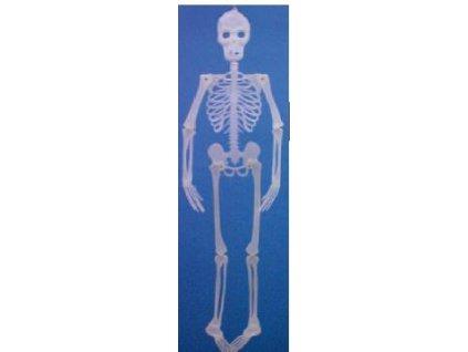 UV kostlivec 150cm
