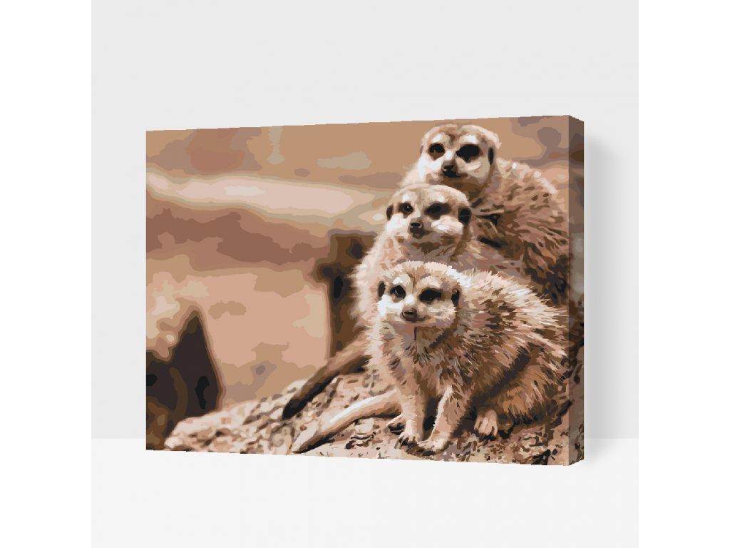 Malování podle čísel - Safari surikaty (Rámování Bez rámu (pouze plátno), Velikost 40x50cm)