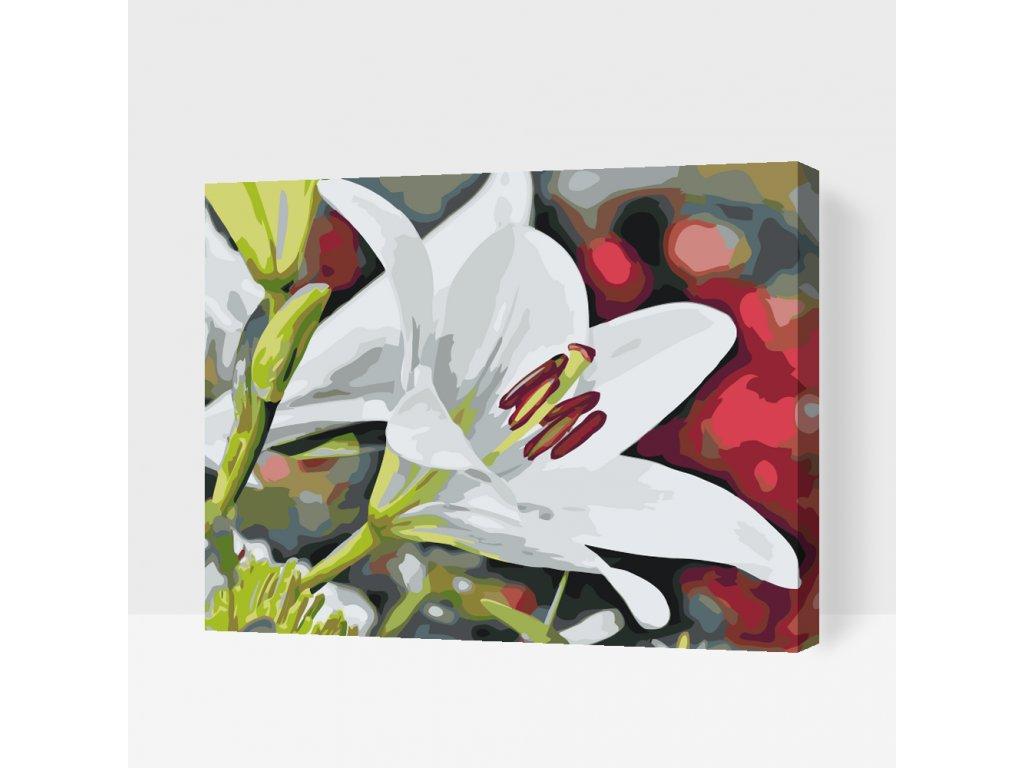 Malování podle čísel - Bílá lilie (Rámování Bez rámu (pouze plátno), Velikost 40x50cm)